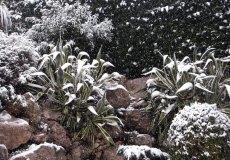 Na Lazurowe też zawitała zima